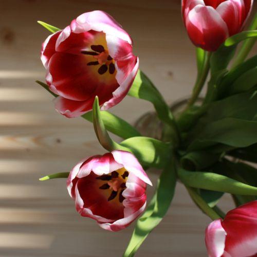 Strauss Tulpen geöffnet