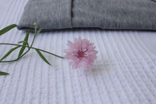 rosa 2 500x333 - Das perfekte T-Shirt - Die lässige Ava von Pattydoo